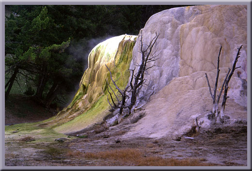 Canary Springs at Mammoth Hot Springs - Yellowstone, WY